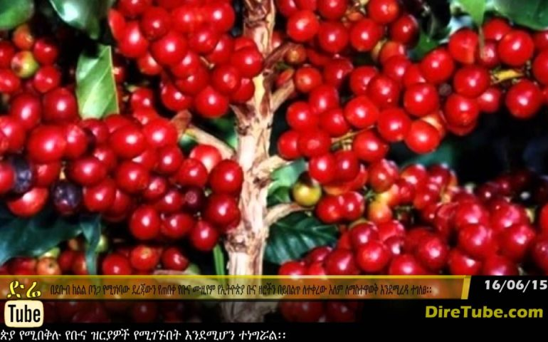 DireTube News – Specialized museum to support Ethiopia's coffee branding efforts