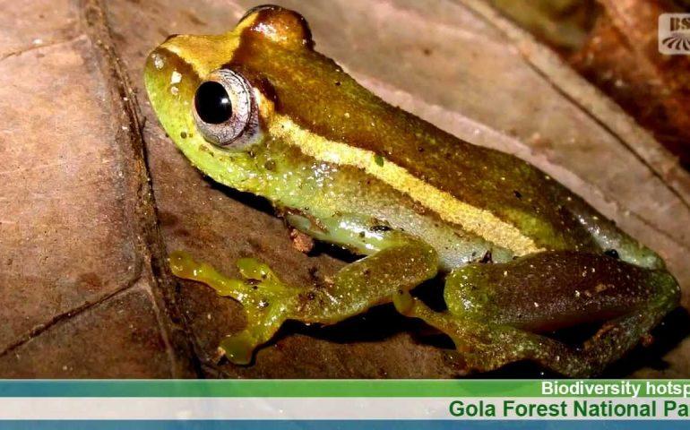 Gola Forest National Park | Brand Sierra Leone News Clip