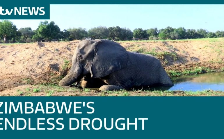 Zimbabwe's National Parks are 'graveyards' due to drought   ITV News