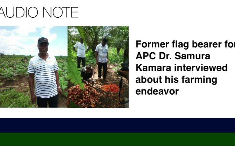 Sierra Leone News: DR.SAMURA KAMARA HAS EMBARK IN CASHEW,COCONUT, AND FRUIT FARMING IN HIS HOME TOWN