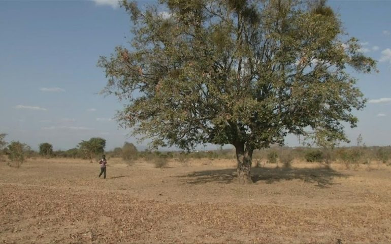 Families survive on one meal in drought-hit Zimbabwe | AFP