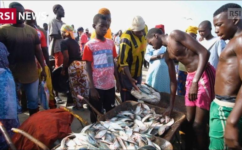 Il pesce del Gambia finisce in Cina   RSI NEWS